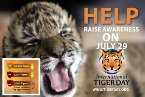 Awareness day charity tiger bristol marketing